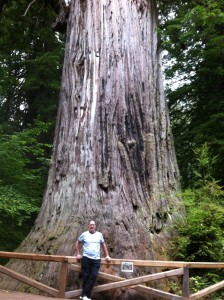 A redwood and me