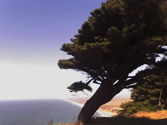 The spectacular coastal views from Point Reyes that we enjoyed six years ago were shrouded in fog on this visit.