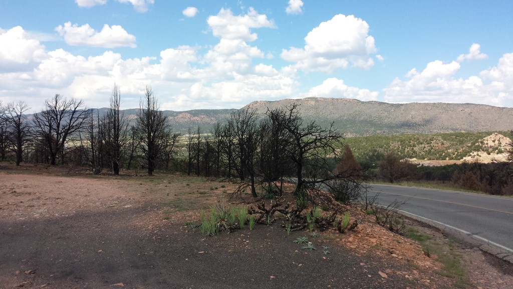 A closer look at the burned trees around the Royal Gorge rim. But look closer ...