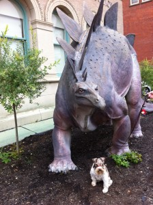 Pittsfield's museums made for some fun walks with Duffy.