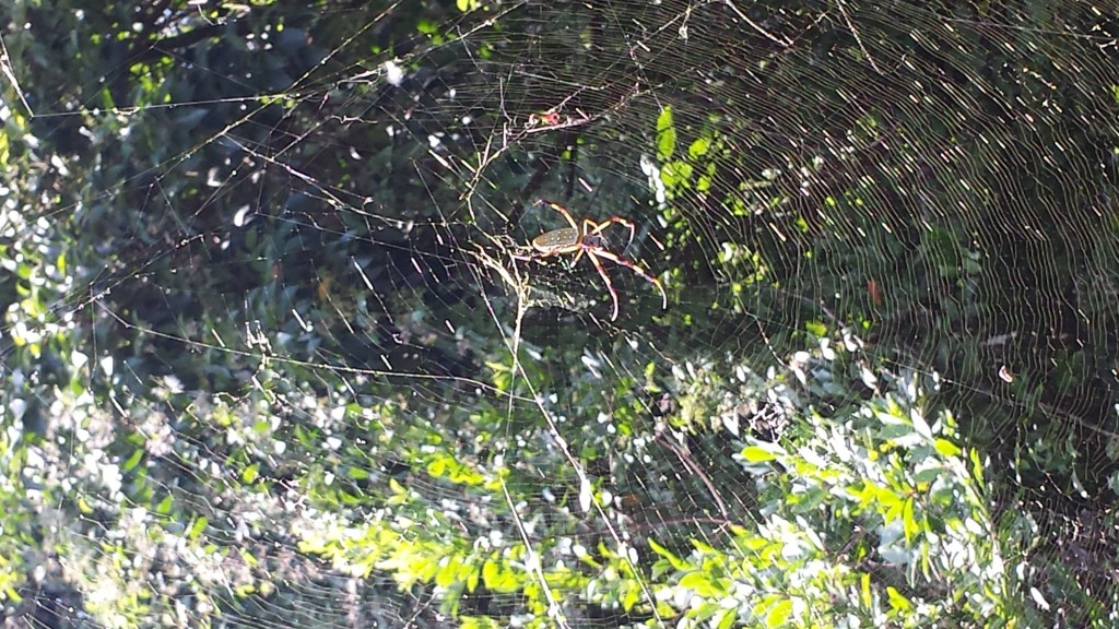 Judging from the web, I think this spider is highly deceptive.