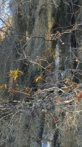 Can you spot the owl here? I'll point it out in a photo at the end of this post.