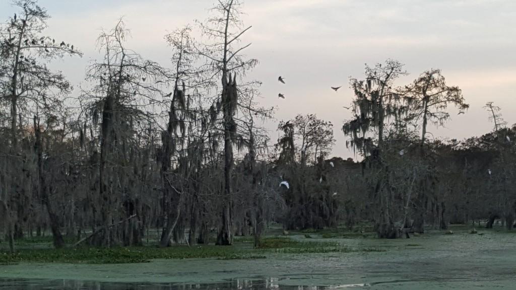 Bedtime for the swamp birds.